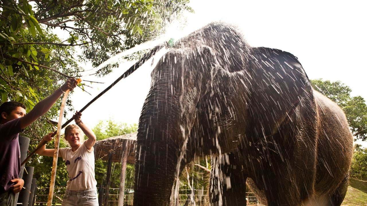 wildlife-rescue-center-showering-an-elephant