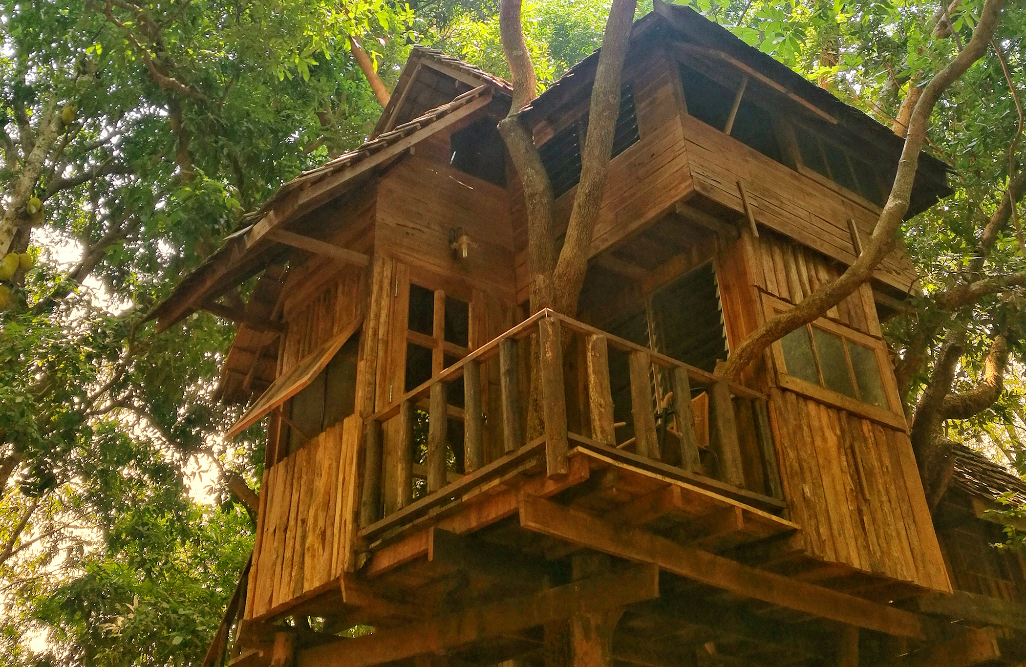 Treehouse Living 3 Days