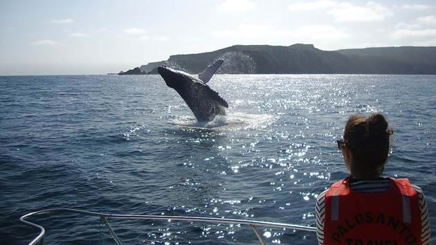 pacific-whale-foundation-1
